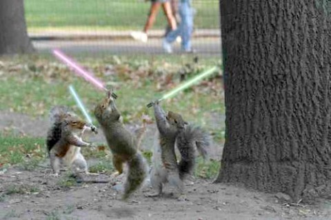 squirrel-jedi-medium-web-view