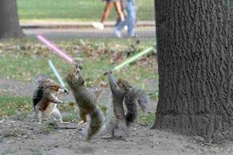 squirrel-jedi-medium-web-view