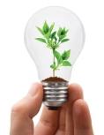 GrowRIMS_lightbulb