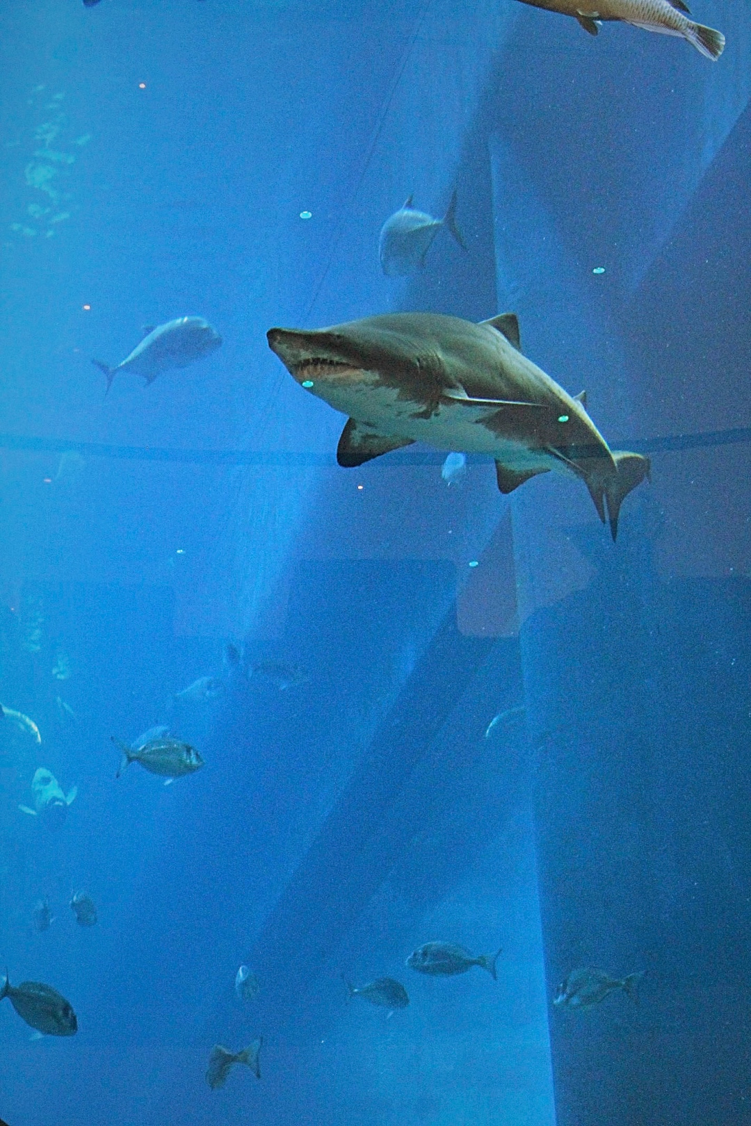Sharknado - Dubai