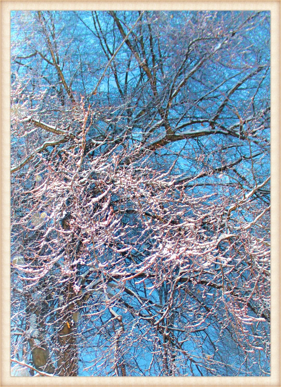 First Snow at Dawn