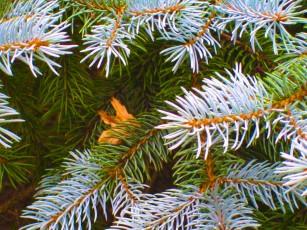 Spruce!
