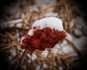 Vignettes - First Snow 2015-1
