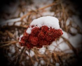 Vignettes - First Snow 2015-1