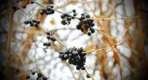 Vignettes - First Snow 2015-3