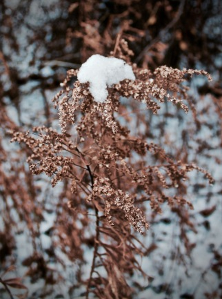 Vignettes - First Snow 2015-4