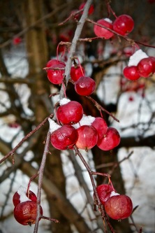 Vignettes - First Snow 2015-6