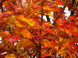 Fall 08-001