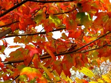 Fall 08-005