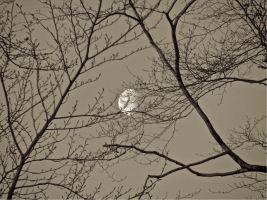 R-Moon 12-002a.jpg