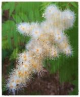 The Colony of Tiny Flowers.jpg